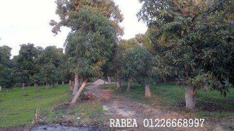 أراضى زراعية للبيع بالاسماعيلية عقارات الاسماعيلية