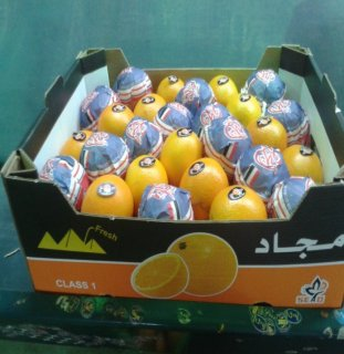 تصدير برتقال مصري فاخر ذو جودة عالية الغني بالفيتامين سي المشهور