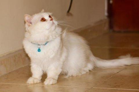 يوجد قطط صغيرا وكبير وياسعار تبداء من 80 ج بس الحق العرض....
