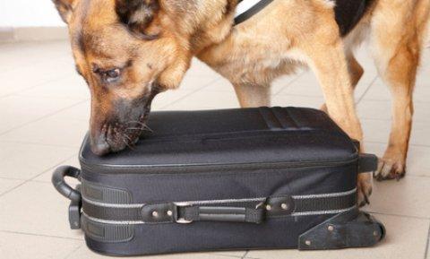 كلاب كشف عن القنابل