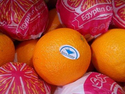 برتقال صيفى مصرى للتصدير 2014