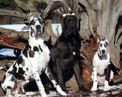 تشكيلة كلاب اعلى مستوى