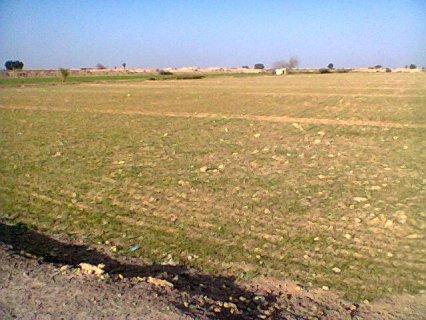 ارض زراعية 5فدان قرية التكامل بنجرالسكر