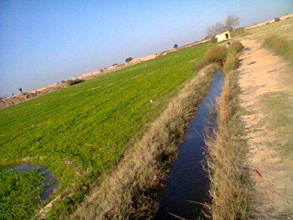 ارض زراعية 20 فدان قرية محمد فريد