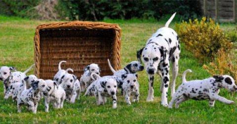 استضافة كلاب