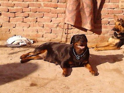 كلبه روت المانى حيضه من يوم 23