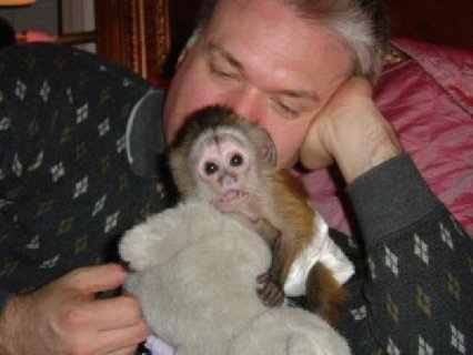 Affordable Tropicana Capuchin Monkeys For Sale