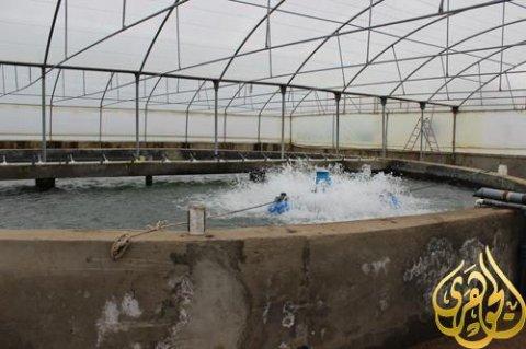 الاستزراع السمكي(المزارع السمكيه)