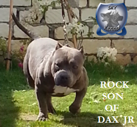 ROCK SON DAX JR