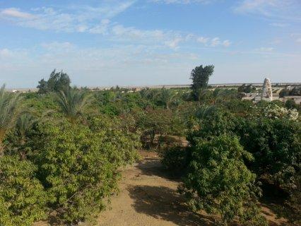 امتلك مزرعه فى طريق مصر الاسماعيليه الصحراوى