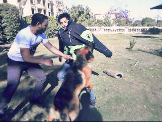 فريق متخصص فى تدريب الكلاب