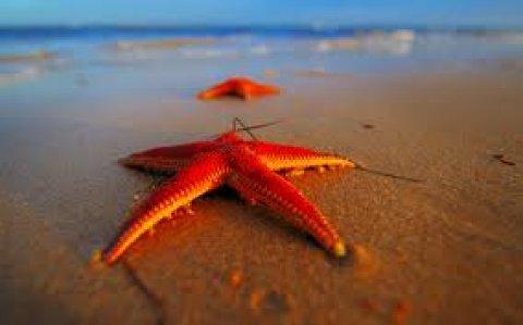 عيش المتعة بالسخنة وامتللك شاليه على البحر بالتقسيط
