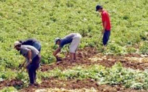 مطلوب فلاحين للعمل بمزرعة بالرياض