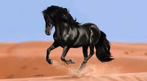 الحصان الاسود من تميمة واحصل ع التالتة هدة 01100107010