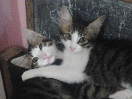 قطط للتبنى بالأسكندرية مجانا
