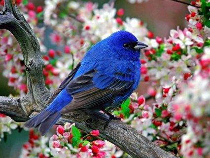 وردة تحب الصراحة حنونة و حساسة و مأدبة