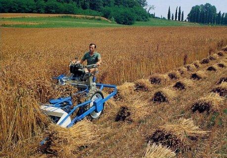 حصادات قمح  ولودر كتربيلر و كوماتسو