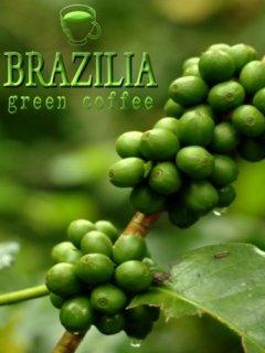 القهوة الخضراء برازيليا للتخسيس