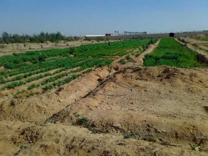 ارض زراعي 5 فدان ومباني 400 متر وادي النيل