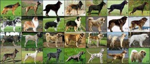 جميع انواع الكلاب متوفرة لدينا
