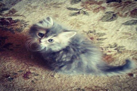 sherzy cat