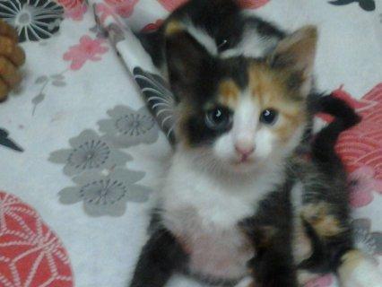 قطط للتبنى بالعجمى بالاسكندرية مجانا