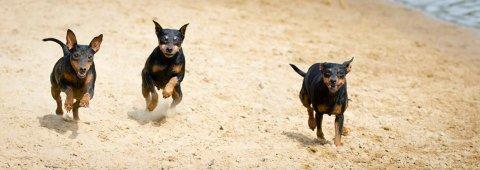 لدينا كلاب فصيلة جميلة ومرحة للبيع ..