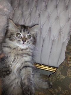 3 قطط مون فيس ولدين وبنت