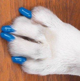 كلبك الآن بدون خدوش مع أغطية مخالب الكلاب