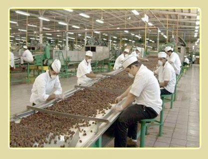 مطــلوب عماله عادية بخط انتاج بمصنع اغذية  بمدينة نصر نقبل اعداد