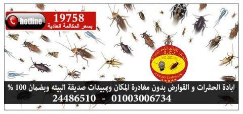 ابادة حشرات حشرات#النمل #الصراصير | #ابادة الحشرات بدون مغادرة ا