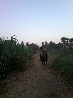 فرس حامل 5 شهور من حصان عربي اصيل