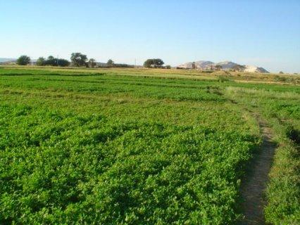 اراضي زراعية واستثمارية من الدرجة الأولى