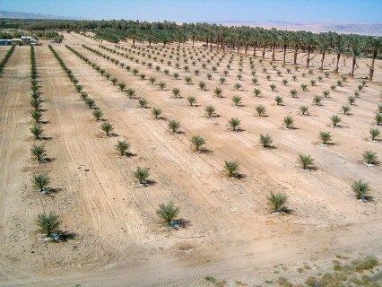 فرصة تملك أرض زراعية على طريق مصر الفيوم
