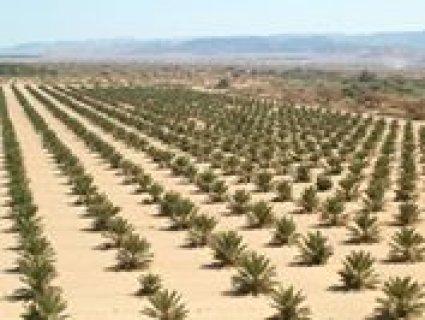 اراضي زراعية للبيع على طريق فيوم السياحي