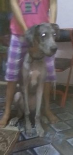 كلب دنواه عمر 8 شهور