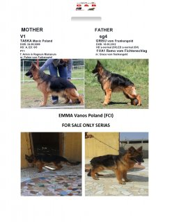 emma female for sale