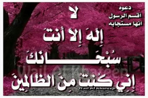 فرصة / عسل سدر يمني / دوعني ملوكي