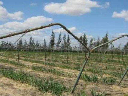 الحزام الخضر ارض للاستخدام في المشاريع الزراعية