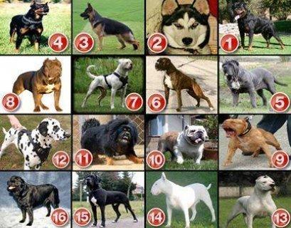 جميع انواع الكلاب بجميع الاعمار