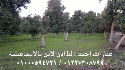 مزرعة للبيع 18.5 فدان عقد مسجل نهائي بجمعية العاشر من رمضان