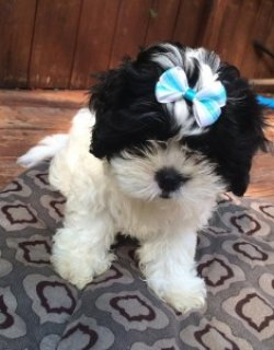 2 Adorable Female Pups Looking For a Home
