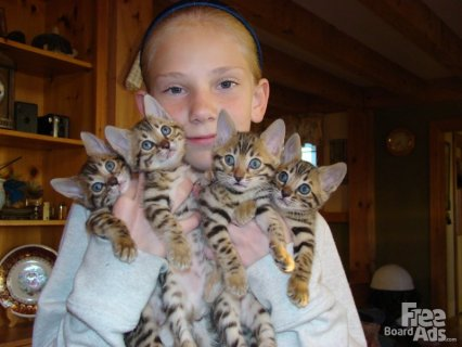 savanna kittens for sale