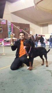 كلب روت وايلر وارد المانيا وبطل مصر وابن بطل عالم