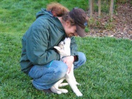 Siberian Husky for Re-homing.....