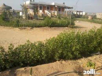 مزرعة 200 فدان للبيع رى نيلى قابلة للتجزئة