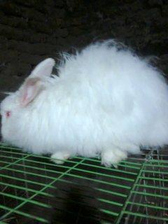 مزارع الخير للأرانب  Elgharbia3
