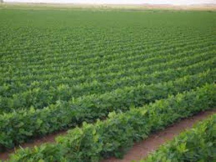 المزرعة النموزجية 19 فدان رى نيلى مسجلة عقد نهائى
