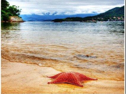 عايز تفتح عينك على منظر البحر وتستمتع بصوت الموج وانت بتفطر ؟ ؟