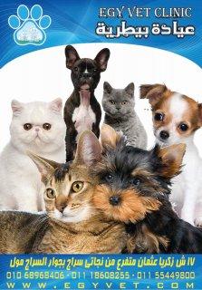 عيادة بيطرية مدينة نصر القاهرة _ egy vet veterinary clinic
